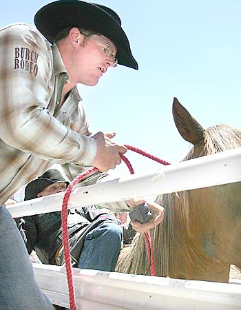 yellow hot-shot cattle prod