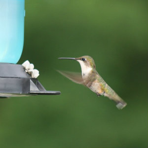 Wat is Google hummingbird?